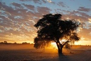 Bild: Südafrika